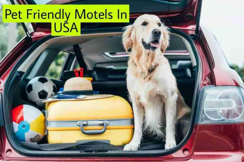 Pet Friendly Motels In USA